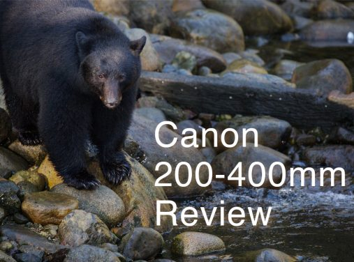 Canon 200-400 Review – Bears of Vancouver Island