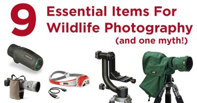 9 Essential Pieces Of Wildlife Photography Gear (And One Myth!)