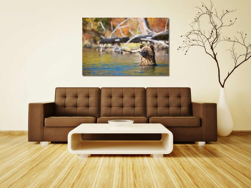 bathing-bear-brown-couch