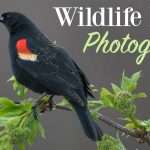 Using Flash For Wildlife Photography