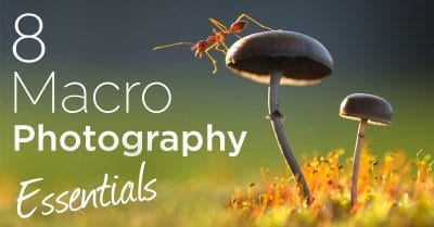 8 Pieces of Essential Macro Photography Gear