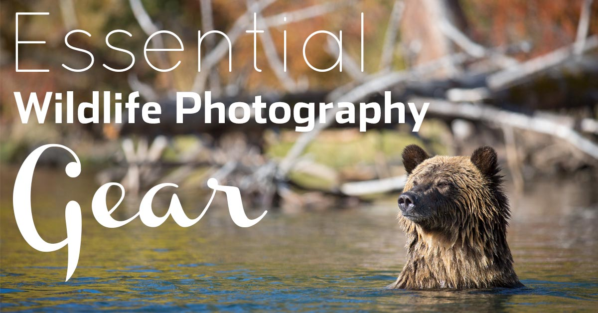 9 Essential Pieces Of Wildlife Photography Gear (+ One Myth!)