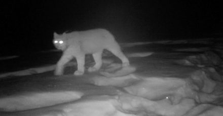 Using a Trail Camera to Research Wildlife Photography Locations
