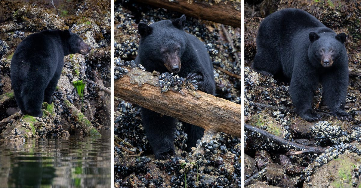 Wildlife Photography Pro Tip: How to Select your Best Images