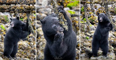 Why Extenders or Teleconverters Are Vital for My Wildlife Photography