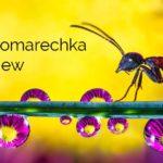 The Don Komarechka Interview