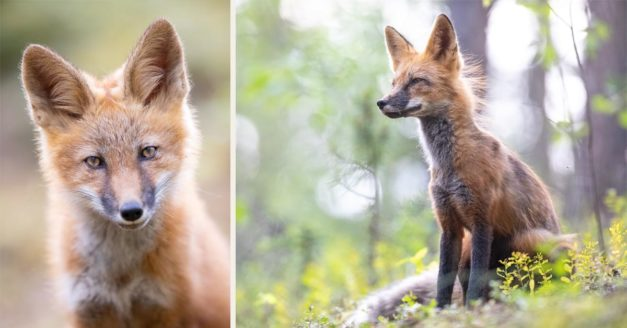 These Two Items Can Help You Get Wildlife Shots Like This