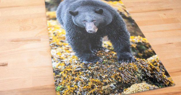 Bumblejax Acrylic Print Review (+Deal)