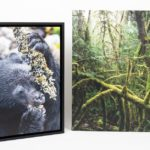 A Review of the 365Canvas Print Service
