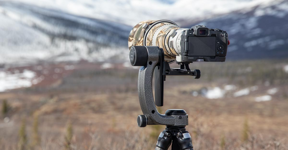 Gitzo Fluid Gimbal Head – Is It Worth Your Money?