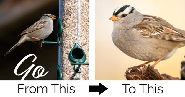The Ultimate Guide to Better Backyard Bird Photography